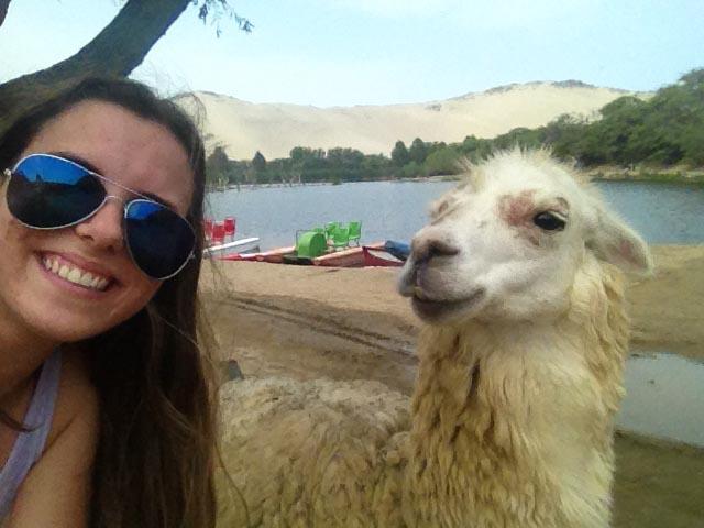 laguna-conache-peru-alpaca